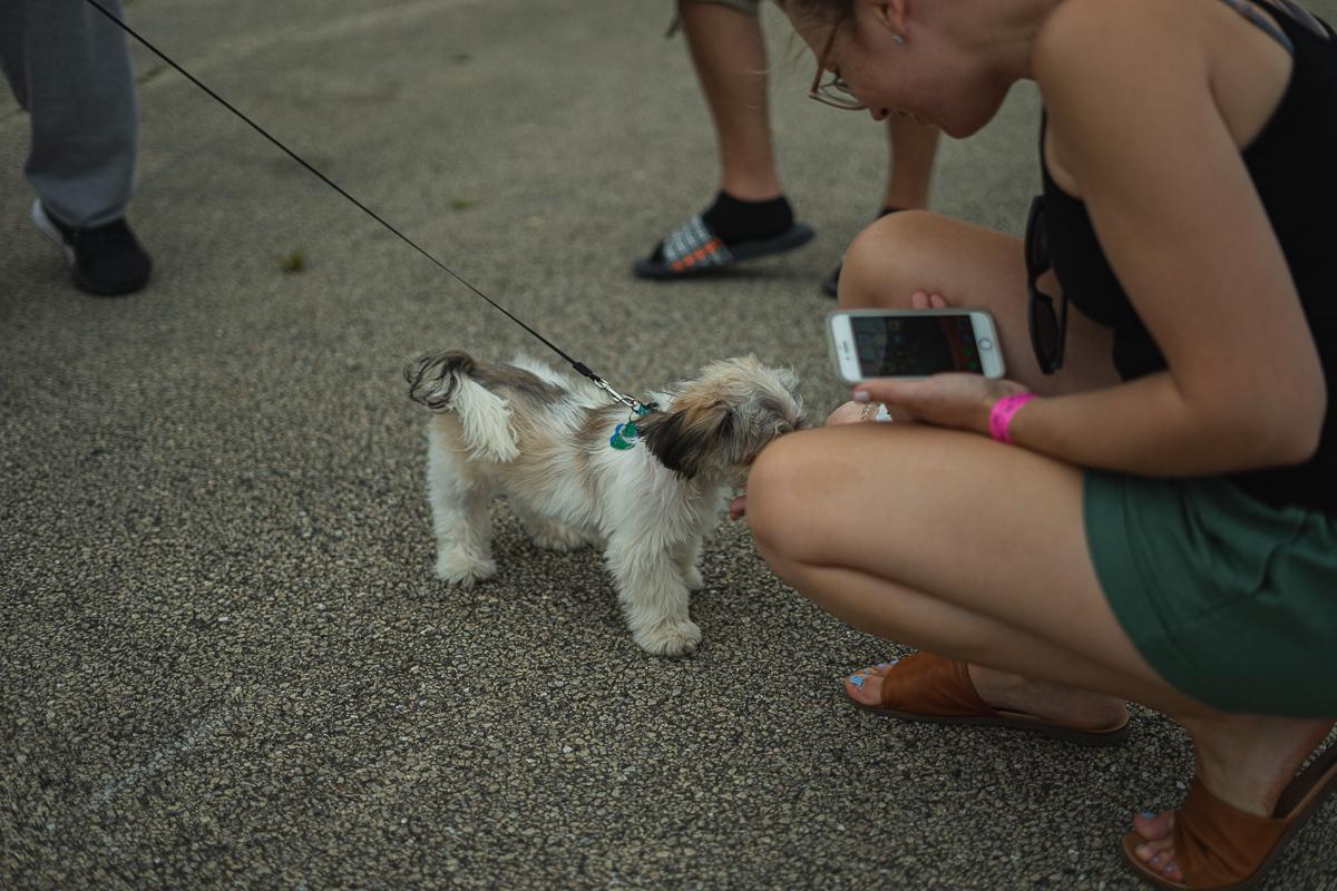 More Subie pups